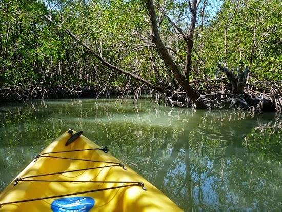 Kayaking Naples Florida