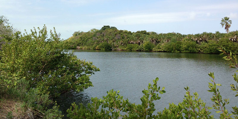 Mangroves at Wiggins State Park Naples Florida