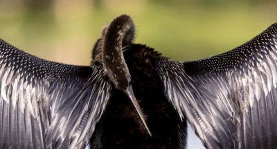 Birdlife Photo Op