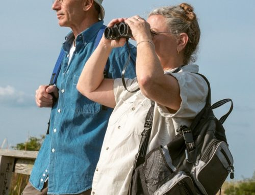 5 Essential Tips for Beginner Florida Bird Watchers