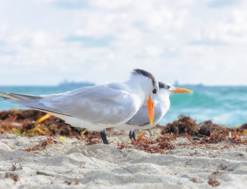 When Is The Best Time For Bird Watching?