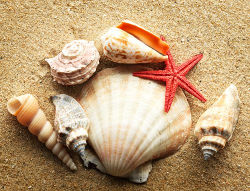Shells of the Paradise Coast: Shelling in Naples Beach