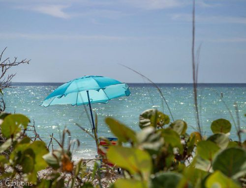 Delnor-Wiggins State Park: Exploring This Iconic Naples Florida Park