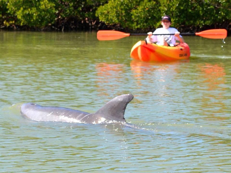 Best Kayak Rentals Naples FL: 5 Things To Experience At This State Park